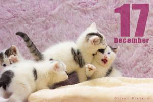 Dec 17 by hoschie