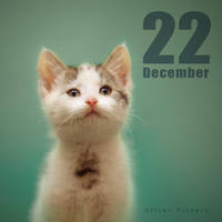 Dec 22 by hoschie