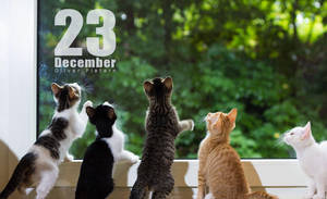 Dec 23 by hoschie