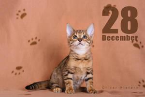 Dec 28 by hoschie