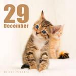 Dec 29 by hoschie