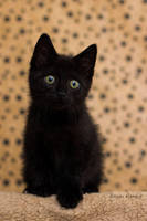 Little Jiji by hoschie