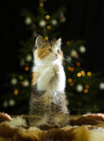 Happy Catmas by hoschie