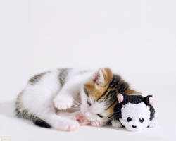 Wallpaper cat and kitty by hoschie