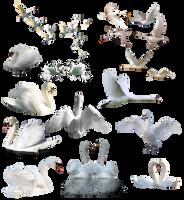 PNG Cisne White by nayareth