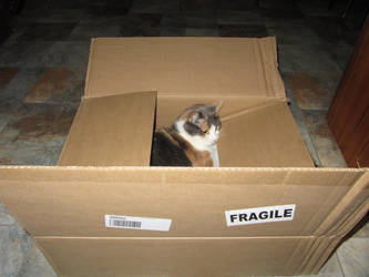 Fragile by man-in-shack