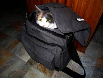 Bag of Kitty Holding by man-in-shack