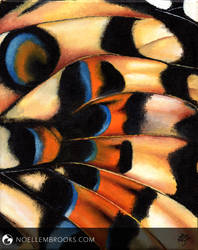 Papilio by NoelleMBrooks