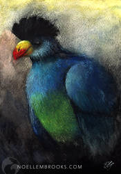 Turaco by NoelleMBrooks