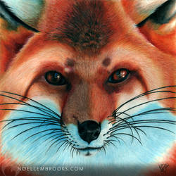 Vulpes by NoelleMBrooks