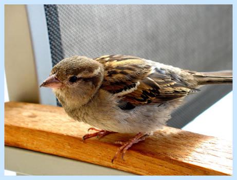 Birdy Too by Pounz