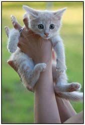 Kitten by scherbelenz
