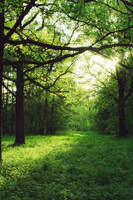 In the forest 2 by PhotoTori