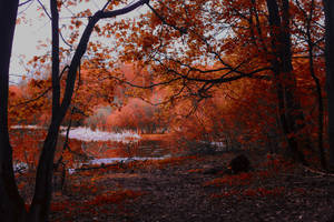 Autumn forest by PhotoTori