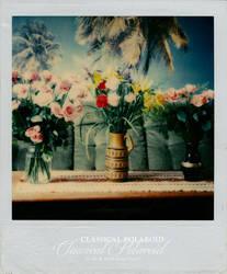 Classical Polaroid by LaCiel