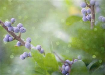 Purple Infusion by MarkGalbreath