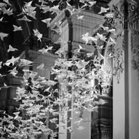 birds flying high by sabas2011