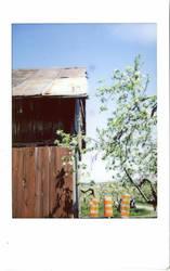 Three Graces Under the Apple Tree by Izaaaaa