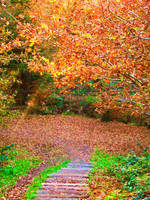 Autumn Steps II by WickedWelshy