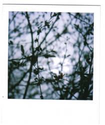 polaroid88 by firstkissfeelings