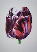 Tulip - Bic pens by 6re9
