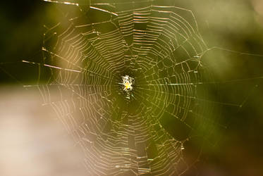 The Owner Of The Web by D250Laboratories