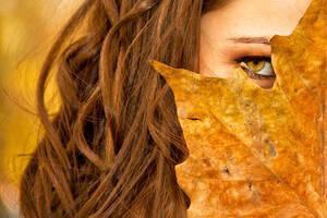 Autumn Leaves ... by D250Laboratories