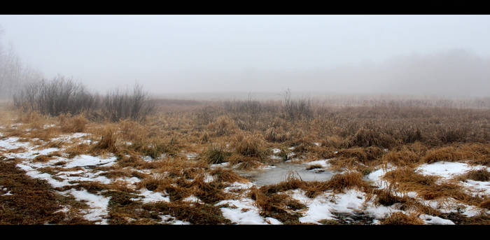 Foggy Swamp Stock by silverthorne-studios