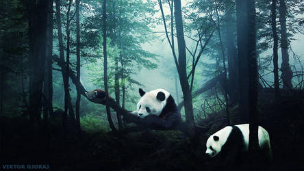 Panda's Photoshop Manipulation by ViktorGjokaj