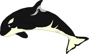 Orca Calf #4 Closed by SilenceisBrilliant