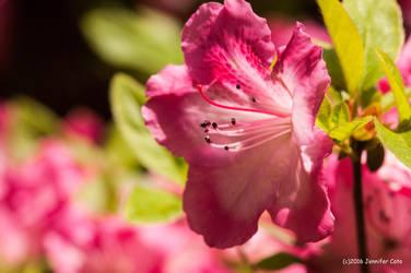Pinkish Pink by jenepooh