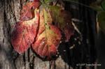 Fall by jenepooh