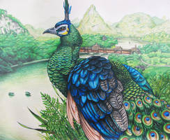 Green Peafowl by JacquelineRae