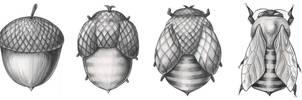 Beecorn- The Metamorphosis by JacquelineRae