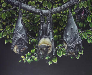 Flying Foxes by JacquelineRae