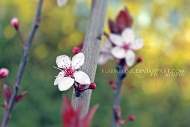 Spring Dance by FlabnBone