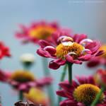 Sweet Fragrance by FlabnBone