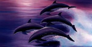 Dolphins 2 by blueeyedgoddess