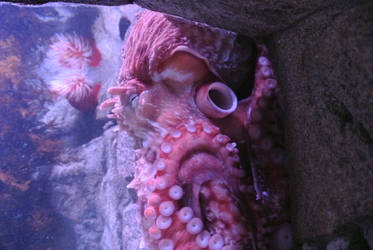 Giant Octopus by ChipmunkFan19