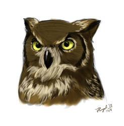 Great Horned Owl by djantir
