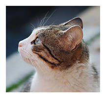 cat.... by kenanka