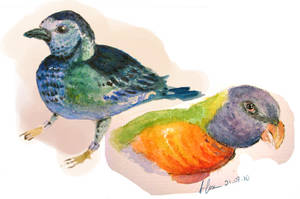 Exotic Birds by alexandresama