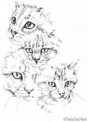Kitty. by TracieMacVean