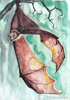 Fruit Bat. by TracieMacVean