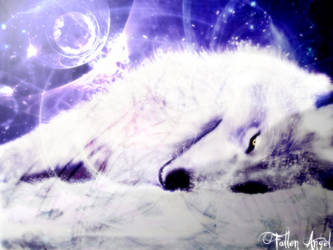White Wolf Wallpaper by FallenAngel1991