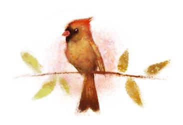 Female Cardinal by BriMercedes