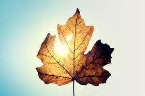 Leaf by vladcoroeanu
