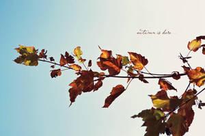 Autumn by vladcoroeanu