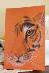Tiger by African-Amber