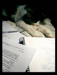 no more homework please by Parororo
